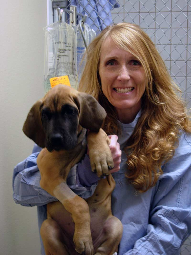 Pet emergency vet taking care of a dog in Colorado Springs, CO