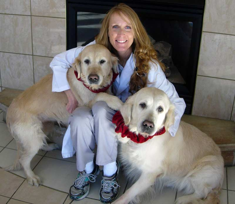 polo-springs-vet-colorado-springs-animal-exams